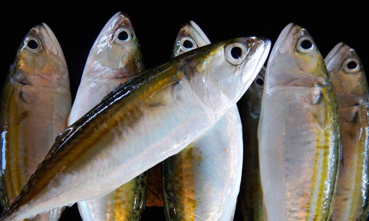 Δείτε ποιο μέρος του ψαριού πρέπει να τρώτε οπωσδήποτε!