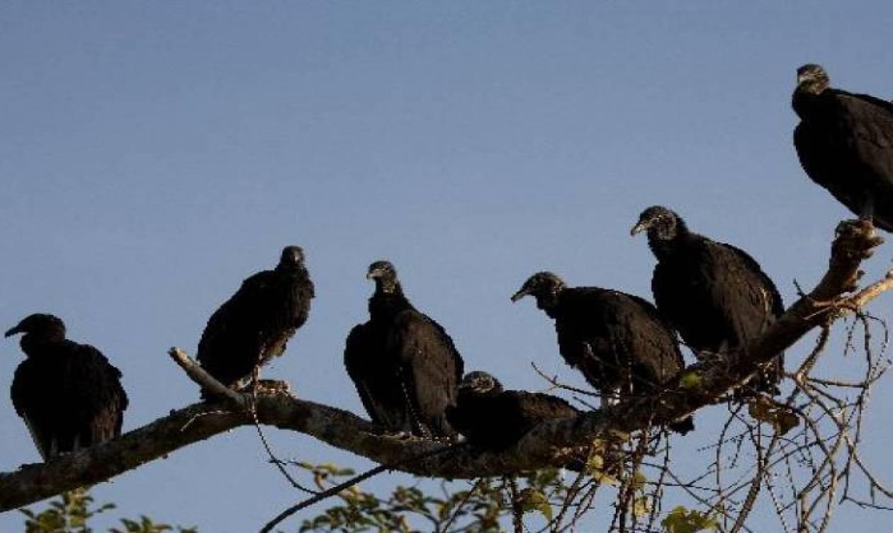 Καμπότζη: Σχεδόν 7.000 απειλούμενα πουλιά γεννήθηκαν με ασφάλεια