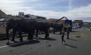 Viral: Έντρομοι αυτοκινητιστές αντιμέτωποι με ελέφαντες σε αυτοκινητόδρομο στην Ισπανία (Pics+Vids)
