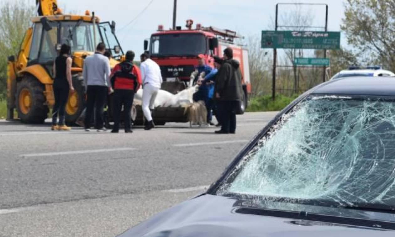 Σοβαρό τροχαίο στην Ξάνθη: Άλογο συγκρούστηκε με αυτοκίνητα (pics)