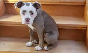 Αυτή είναι η πιο θλιμμένη σκυλίτσα του διαδικτύου, που έχει κατακτήσει του πάντες (pics)