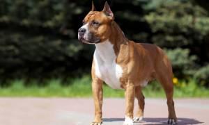 Τραγωδία: Σκύλος σκότωσε επτά μηνών βρέφος