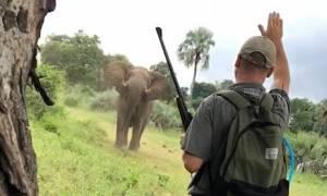 Απίστευτο: Με μια κίνηση σταμάτησε ελέφαντα επτά τόνων! (vid+pic)