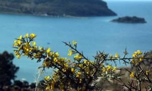 Καιρός: «Μίνι» καλοκαίρι το Σαββατοκύριακο - Πού θα φτάσει ο υδράργυρος