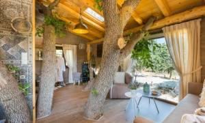 Ρέθυμνο: Τα δεντρόσπιτα - ξενοδοχεία που βγήκαν από παραμύθι (photos)