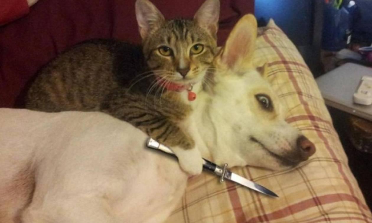 Viral: Όταν οι γάτες φέρονται σαν τα πιο «σατανικά» πλάσματα στον πλανήτη (Pics)