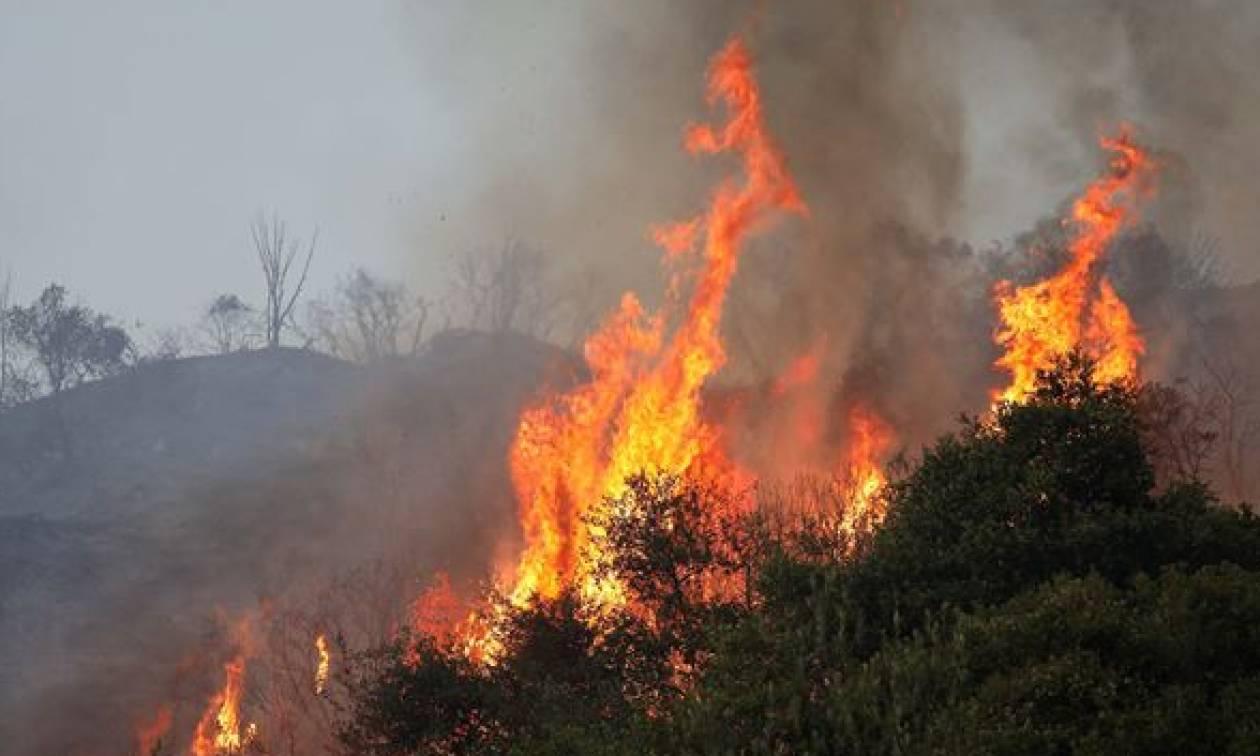 Φωτιά: Μεγάλη πυρκαγιά στη Φρίξα Κρεστένων (pics)