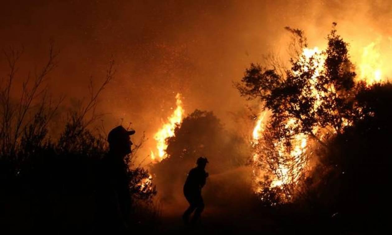 Φωτιά Ηλεία ΤΩΡΑ: Νέα πυρκαγιά σε εξέλιξη στην περιοχή της Σπιάντζας (χάρτης)