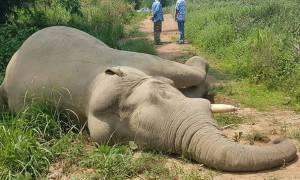 Ανθρωποκυνηγητό για τον άνδρα που προκάλεσε ηλεκτροπληξία σε ελέφαντες