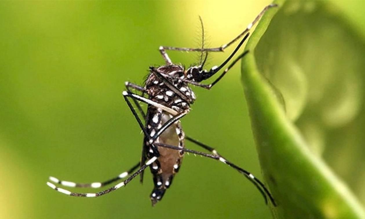 Ξεκίνησε το πρόγραμμα καταπολέμησης των κουνουπιών