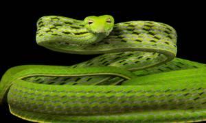 Σοκαριστικό: Φίδι επιτίθεται σε μηχανόβιο κι αυτός... (video)