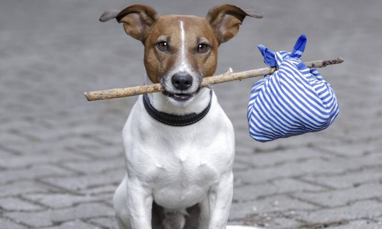 Ελικόπτερα, κάμερες θερμικής απεικόνισης και χιλιάδες εθελοντές στην αναζήτηση χαμένων… σκύλων