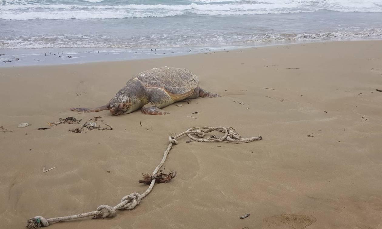 Μακάβριο θέαμα σε παραλία του Ηρακλείου