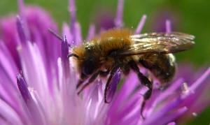 Νεκρός από τσίμπημα μέλισσας ο Πέτρος Φαρμάκης
