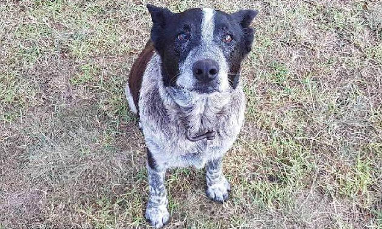 Σκύλος έμεινε 15 ώρες στο πλάι 3χρονης που χάθηκε στο βουνό!