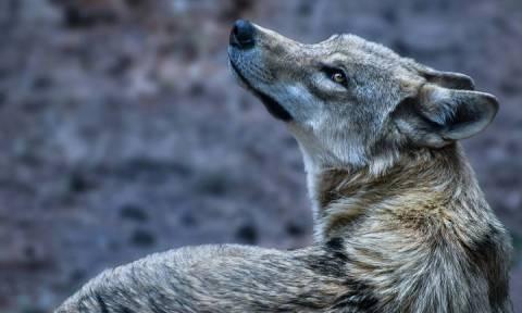 Κοιλάδα των Άγριων Λύκων: Η νέα τουριστική ατραξιόν της Κίνας