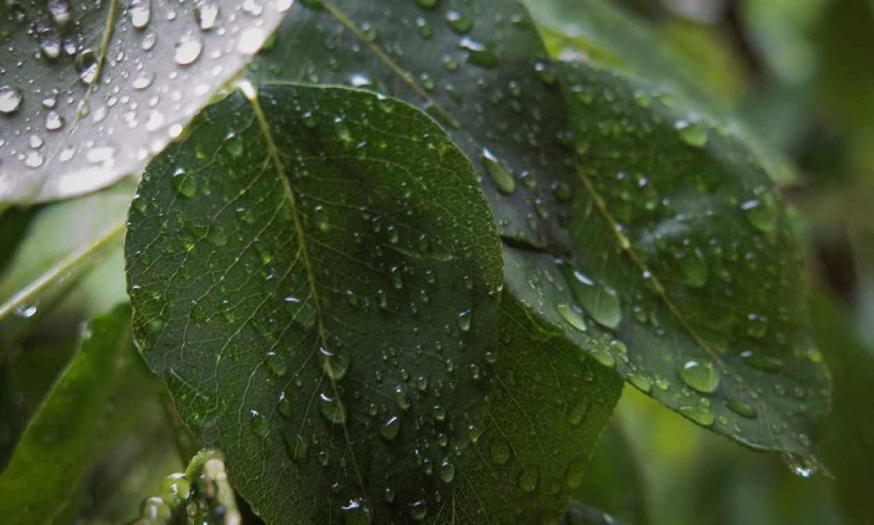 Καιρός για ομπρέλες: Πού θα βρέξει την Πρωτομαγιά – Έρχονται ισχυρά φαινόμενα
