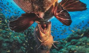 Δείτε τις καλύτερες υποβρύχιες φωτογραφίες της τελευταίας 15ετίας! (pic)
