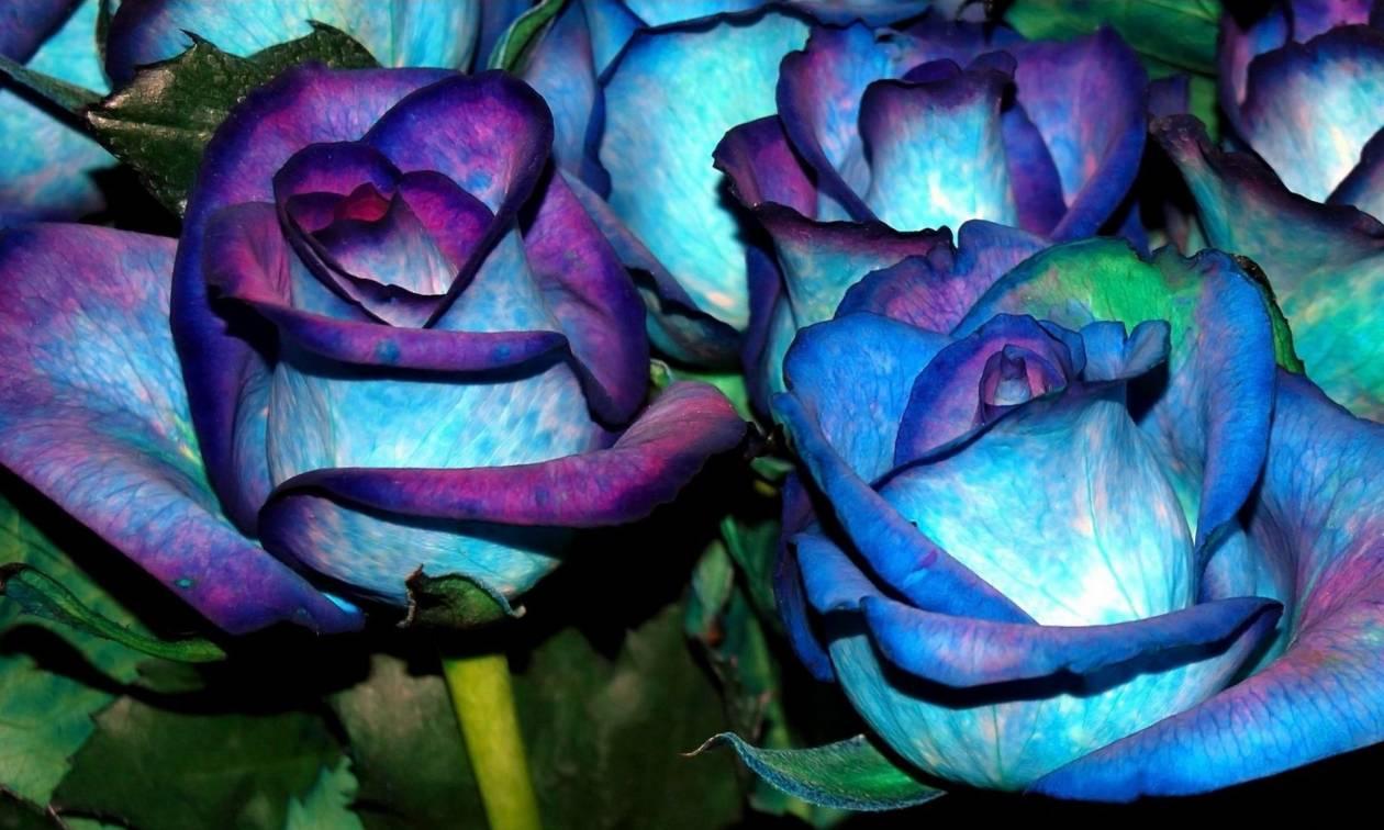 Η ανακάλυψη που θα «δώσει» στα τριαντάφυλλα ό,τι χρώμα θέλετε