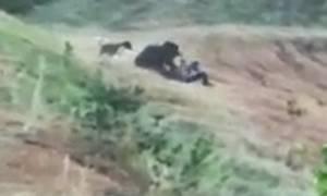Βίντεο ΣΟΚ: Πήγε να βγάλει selfie με αρκούδα και τον κατασπάραξε!
