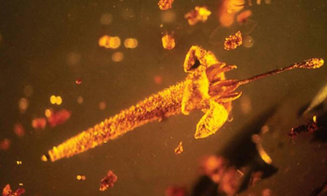 Δηλητηριώδη λουλούδια ηλικίας 15 εκατομμυρίων ετών βρέθηκαν κρυμμένα σε κεχριμπάρι (Pics)