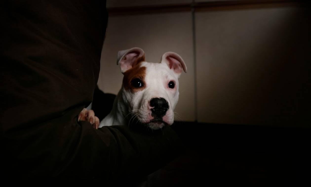 Η κλήση που «τρέλανε» το κέντρο πρώτων βοηθειών: «Βοήθεια! Με πυροβόλησε ο σκύλος μου»