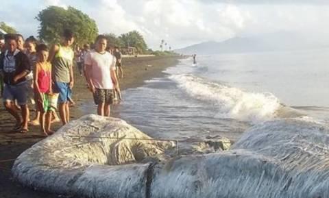 Απόκοσμο «μαλλιαρό» πλάσμα ξεβράστηκε σε παραλία των Φιλιππίνων (Εικόνες – σοκ)