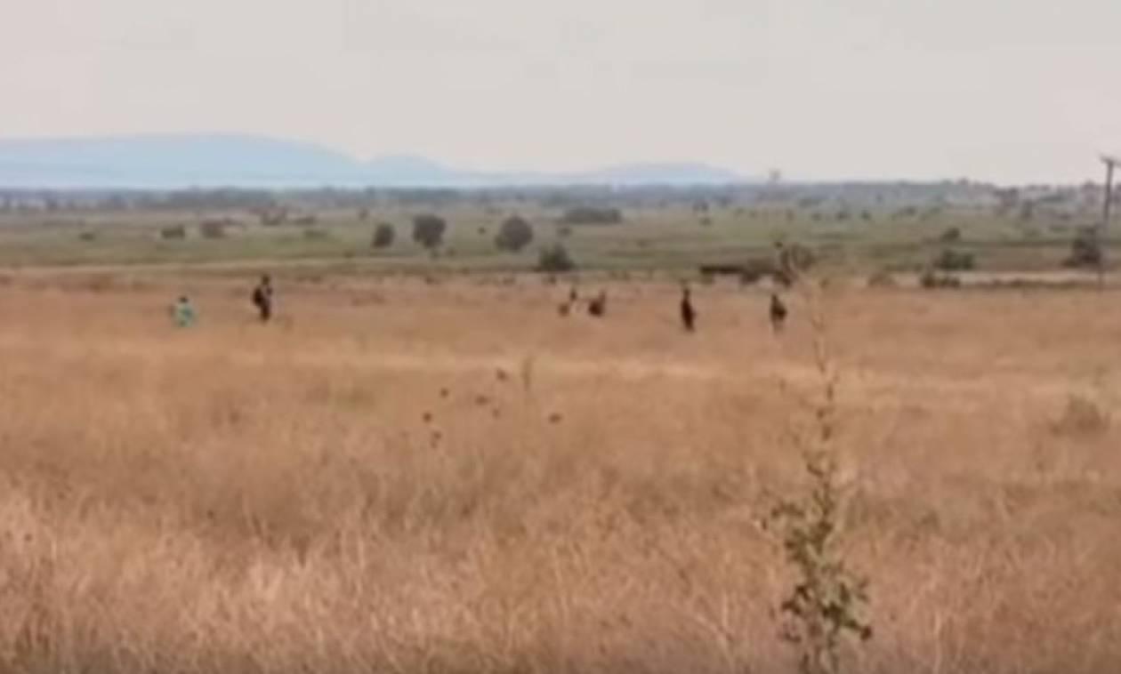 Βίντεο - οδοιπορικό στον Έβρο: Αναζητώντας τα προσφυγικά περάσματα