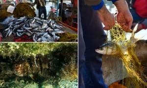 Αποκλειστικό Cnn.gr: Εισβολή ξένων ειδών στις ελληνικές θάλασσες-Πόσο επικίνδυνο είναι το φαινόμενο;