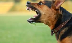 Πτολεμαΐδα: Άγρια επίθεση σκύλου σε 10χρονο