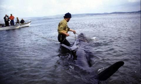 На Миконосе нашли мертвого кита