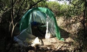 Σπάρτη: Ξετρύπωσαν τη φυτεία, αναζητούν τους καλλιεργητές (pics)
