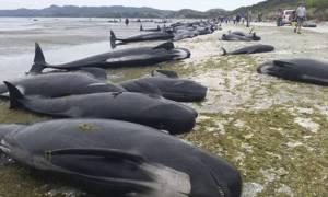Ιαπωνία: Κυνηγοί σφαγίασαν 333 φάλαινες για «ερευνητικούς σκοπούς» και οι 120 ήταν έγκυες