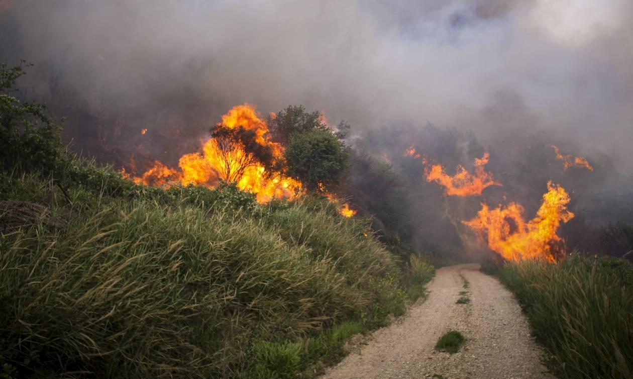Συναγερμός στην Πυροσβεστική: Μεγάλη φωτιά στην Εύβοια
