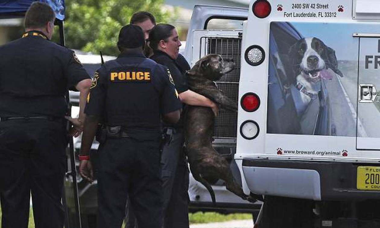 Σοκ στη Φλόριντα: Κοριτσάκι 8 μηνών σκοτώθηκε από το πίτμπουλ της οικογένειας