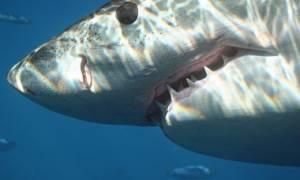 Σοκ στη Βραζιλία: Καρχαρίας έκοψε το πέος λουόμενου - Πολύ σκληρές εικόνες