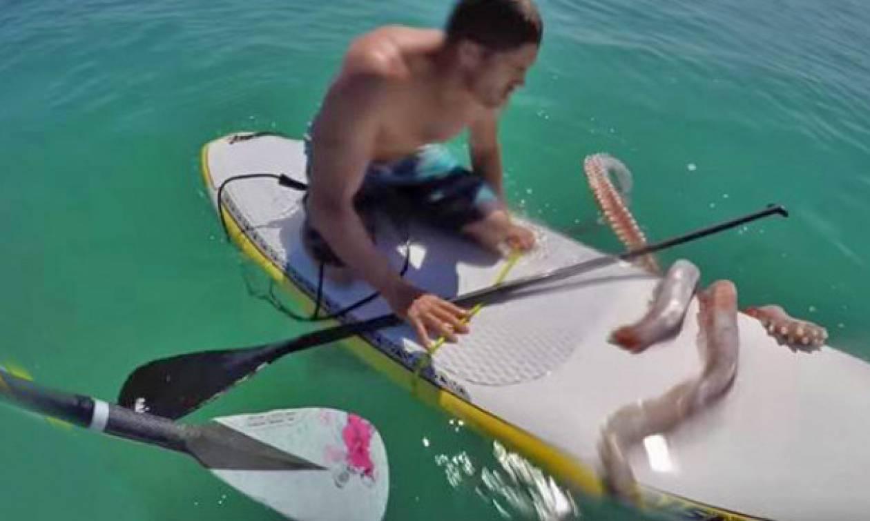 Γιγάντιο καλαμάρι γραπώνει την σανίδα ανυποψίαστου σέρφερ (video)