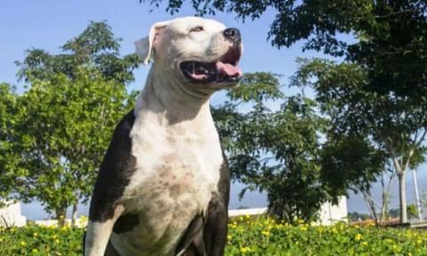 В Нафпактосе собака вцепилась в лицо 10-месячному младенцу