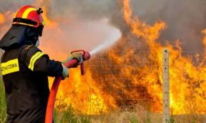 Μανωλαδα: Μεγάλη πυρκαγιά σε καταυλισμό