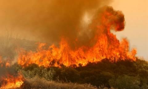 За последние сутки в пожарную службу Кипра поступило более 30 вызовов