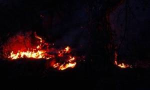 Λάρισα: Συναγερμός από πυρκαγιά στο Γεντίκι