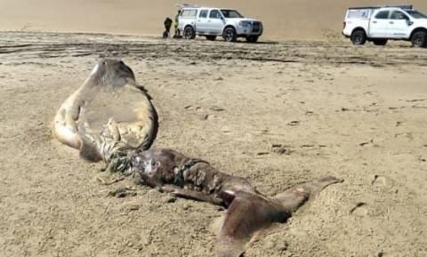 Απόκοσμο κουφάρι πλάσματος ξεβράστηκε στη στεριά - Προβληματισμένοι οι βιολόγοι (pics)