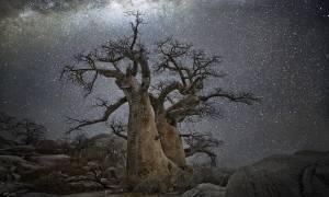 Μυστήριο με τον ξαφνικό θάνατο υπέργηρων δέντρων από την εποχή των Αρχαίων Ελλήνων (Pics)