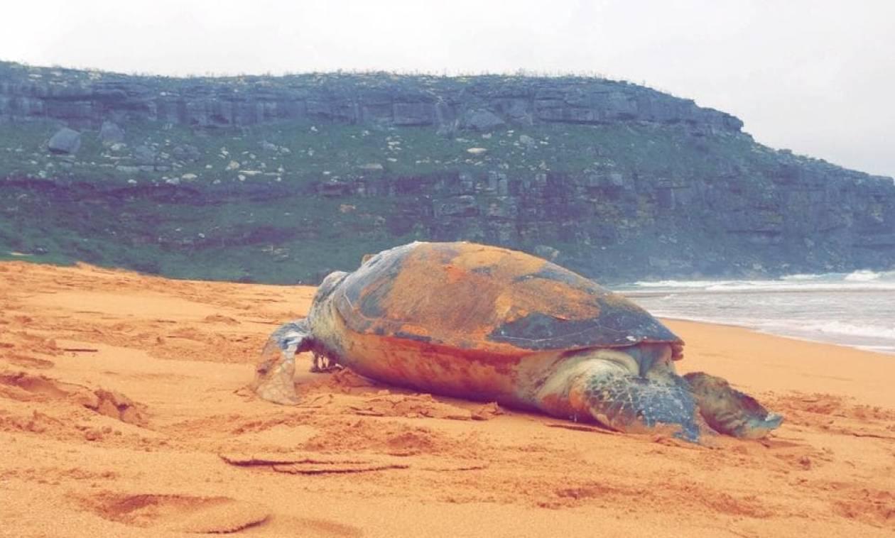 Πήγαν να βοηθήσουν μια θαλάσσια χελώνα: Τίποτα δεν προμήνυε αυτό που θα ακολουθούσε! (Pics)