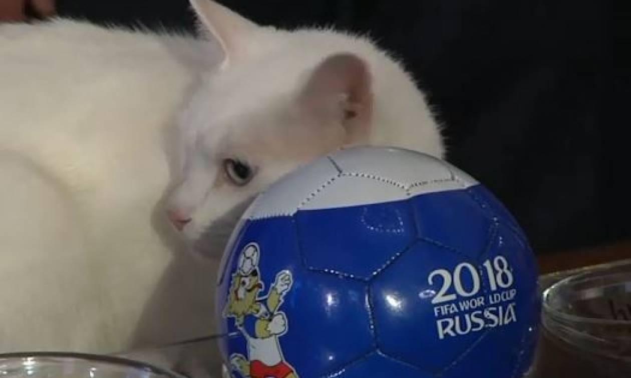 Παγκόσμιο Κύπελλο 2018: Ο Αχιλλέας ο γάτος προέβλεψε το νικητή μεταξύ Ρωσίας - Σαουδικής Αραβίας