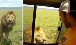 Ο πιο ηλίθιος τουρίστας: Άπλωσε το χέρι του για να χαϊδέψει λιοντάρι και δείτε τι συνέβη!