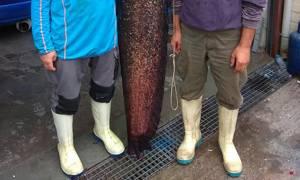 Ψαράδες από το Βελβεντό έριξαν παραγάδι και έβγαλαν αυτό το ΘΗΡΙΟ! (pics)