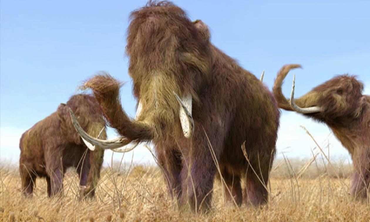 Τα πρώτα ζώα της Γης είχαν προκαλέσει και αυτά κλιματική αλλαγή
