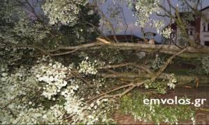 Καιρός: Ανεμοστρόβιλος σάρωσε τα Τρίκαλα Ημαθίας (pics)