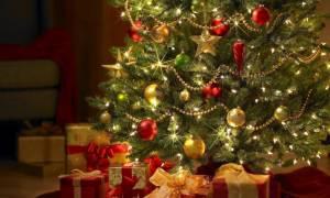 Καβάλα: Άναψαν το χριστουγεννιάτικο δέντρο στην πλατεία – Δεν φαντάζεστε το λόγο (pic)